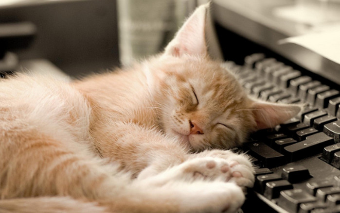 кот спит возле клавиатуры