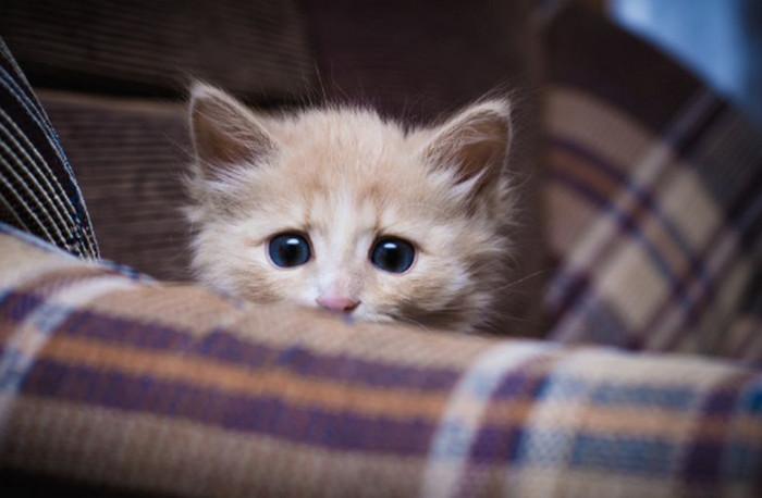 котенок напуган