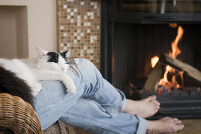кошка лежит на коленях
