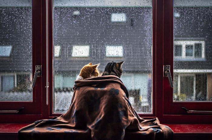 коты смотрят в окно