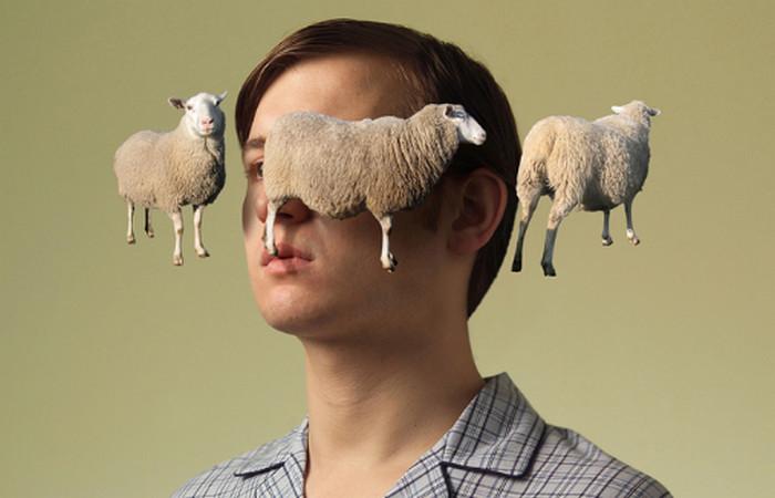 мужчина считает овец