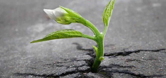цветок прорастает сквозь асфальт
