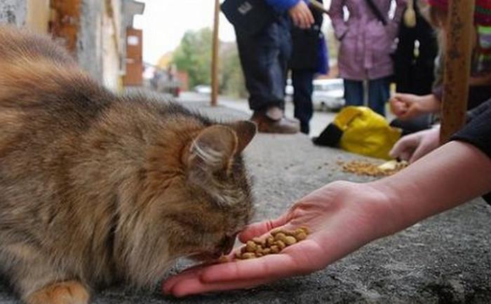 кормит бездомного кота