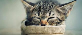 котенок в тапке
