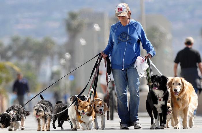 выгуливает собак