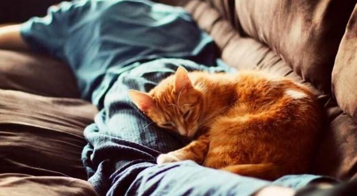 кот спит на человеке