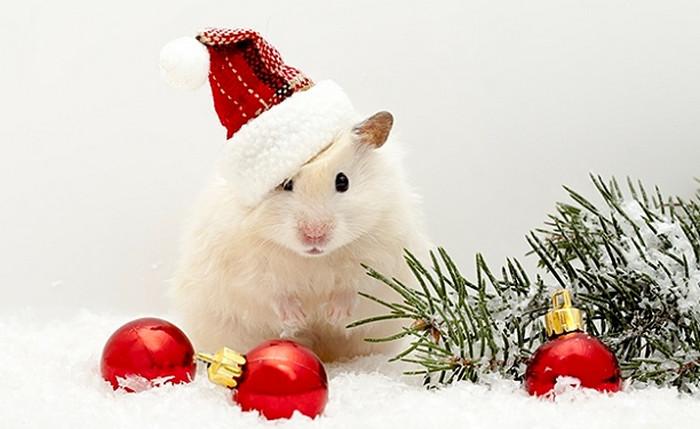 белая мышь в шапочке